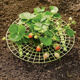 Handy strawberry supports for your garden,keep strawberries off rot in the rainy days